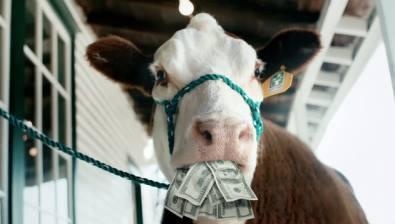 Vache de loterie